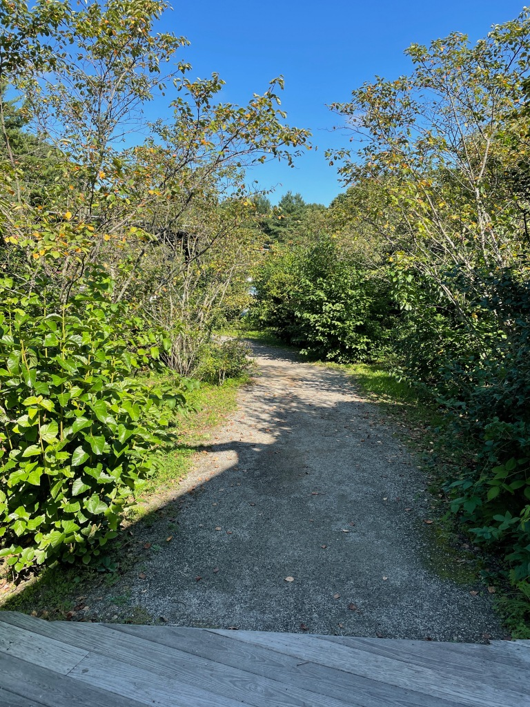 There's both a wood ramp and a wide dirt path from the parking lot, visitor's center and...
