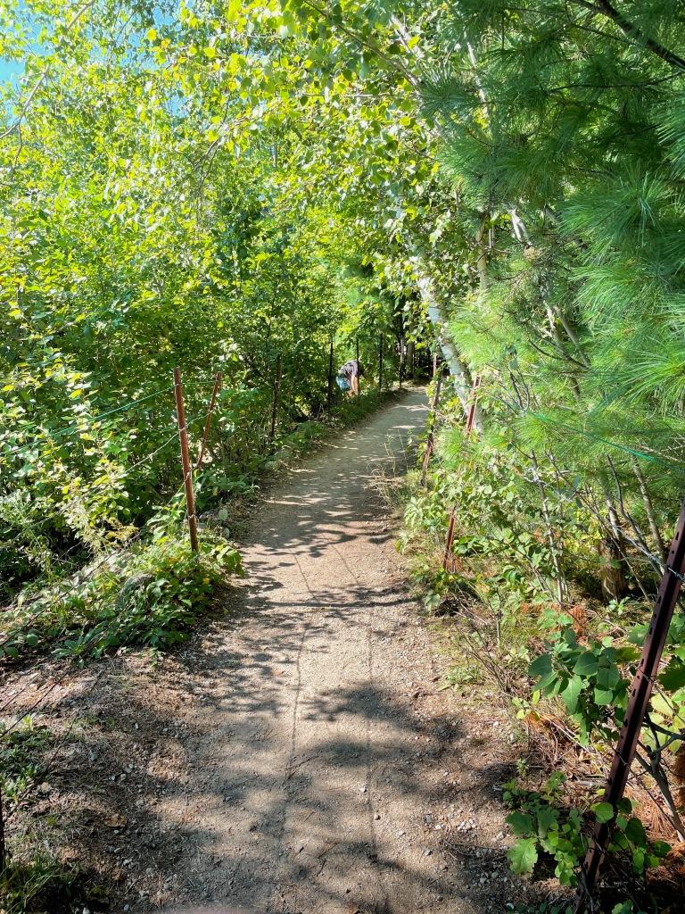 The walking path around the pond.