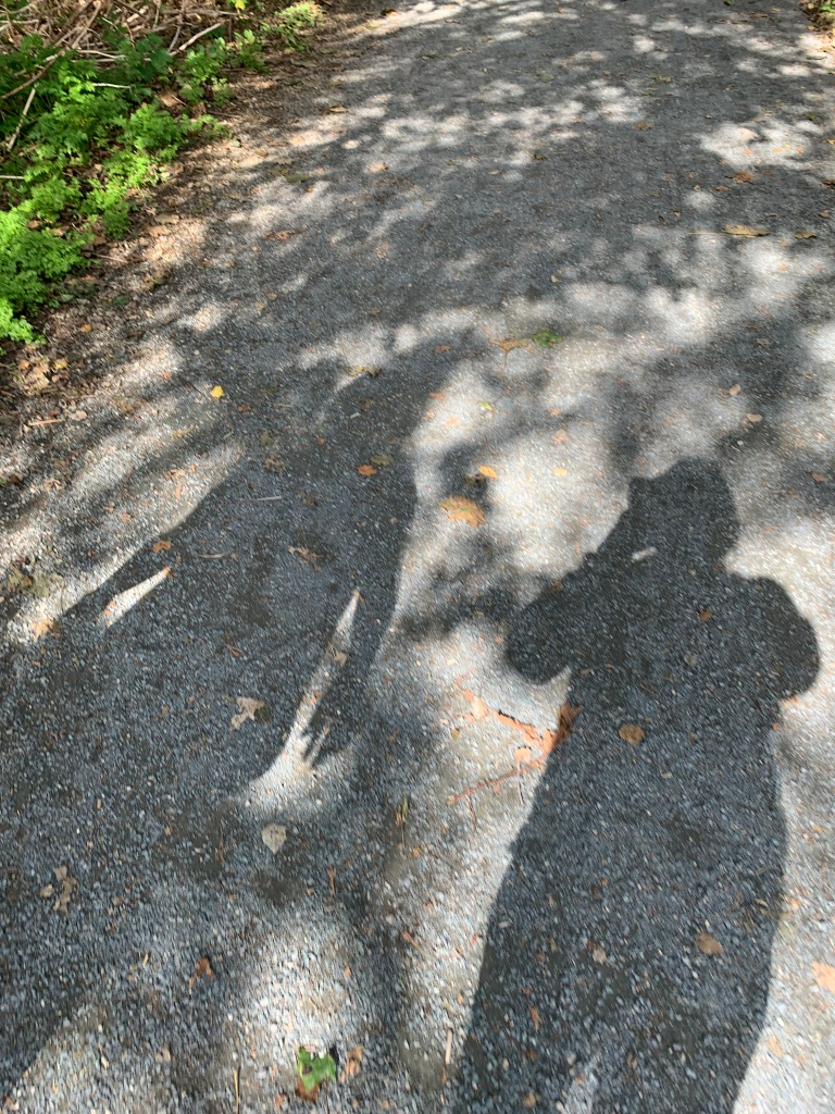 Two people's shadows among the shadows of leaves on a gravel pathway. There are fallen leaves among the gravel and there is a patch of greenery on the upper left side.