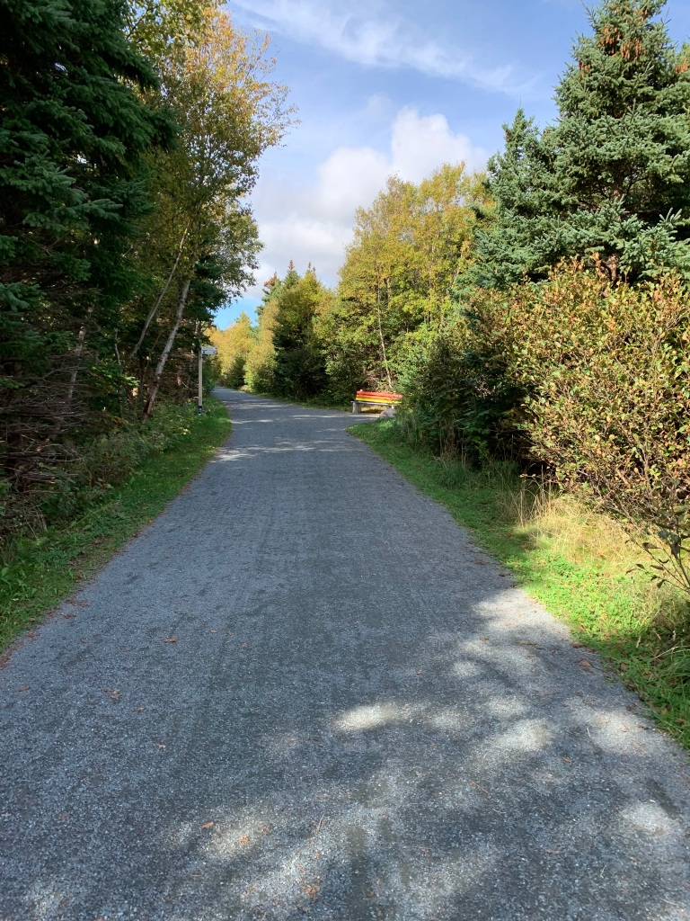 A wide gravel path with trees and grass on both sides is in partial sunlight. A park bench painted in rainbow/Pride colours can be seen ahead on the right side.